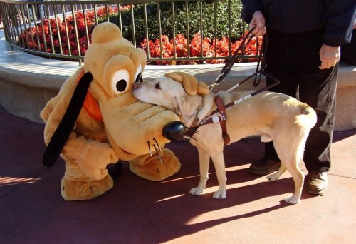 Dogs at Disney World with pluto