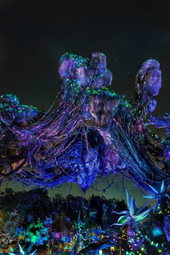 AFTER HOURS AT DISNEY'S ANIMAL KINGDOM REVIEW