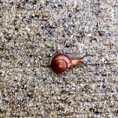 08102014-Snail