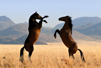 Wild_Horses01_High_Res