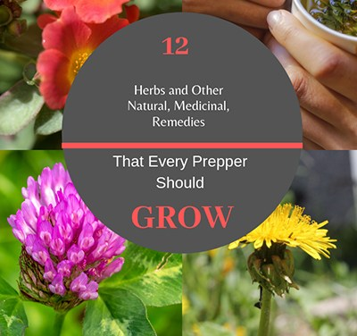 12 Plants Every Prepper Should Grow