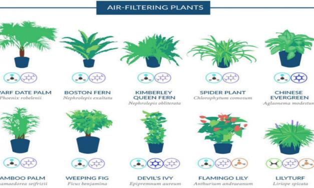 18 NASA Recommended Plants For Air Purification