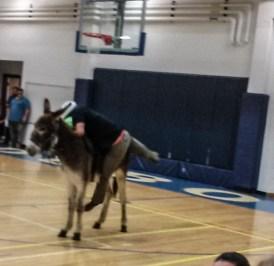 DonkeyBasketball2