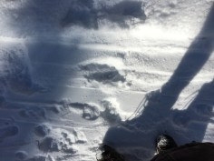 MoosetracksShadow2_121117