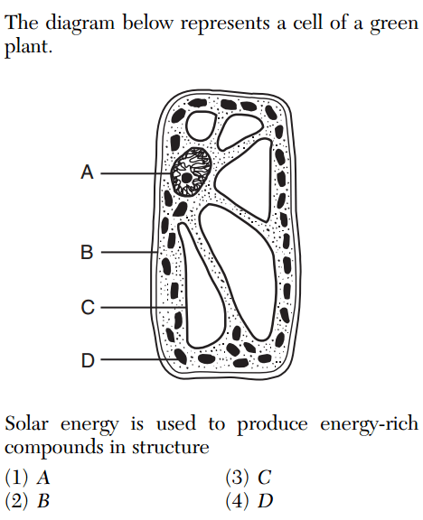 Solar Energy Is Used To Produce Energy Rich Compounds In : solar, energy, produce, compounds, 8.2011, Regents, Living, Environment