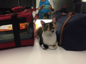 Travels with Momo