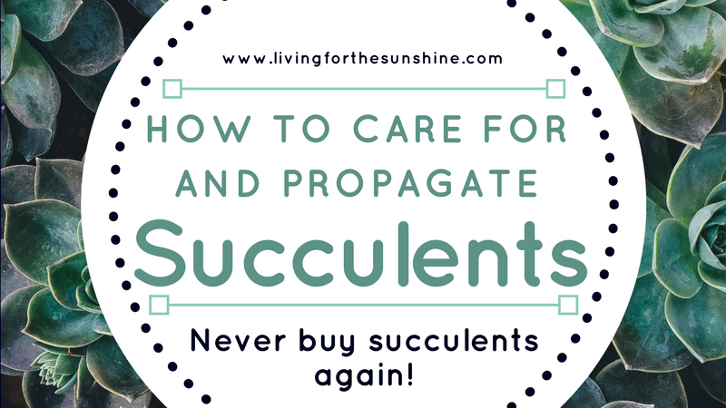 How to Care and Propagate succulents