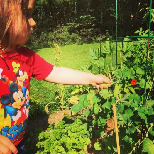 Teach your children to garden