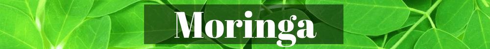 Moringa green superfood for smoothies