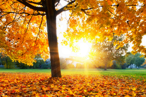 Fall Sunshine Wallpaper Fall Is A Great Time To Soak Up Sunshine For Your Health