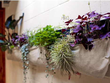Breathable recycled wool planter bags can be your choice for creating lush green wall.