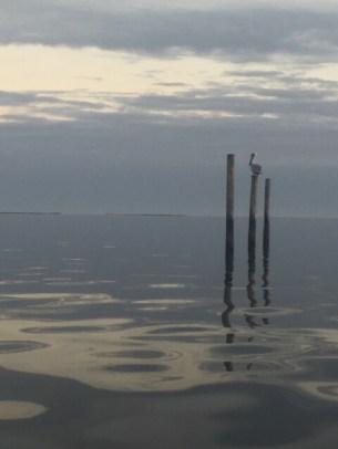 Gulf of Mexico, Carrabelle, Floria