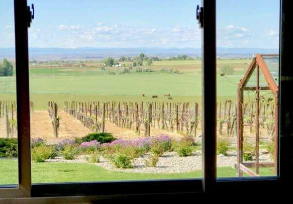 View from the sunroom at Snyder Winery