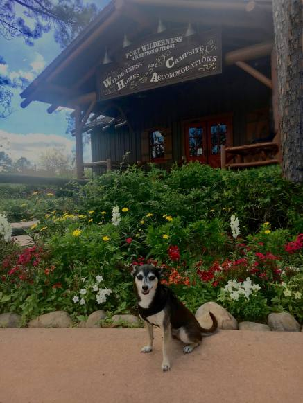Disney World - Our Fort Wilderness Pup
