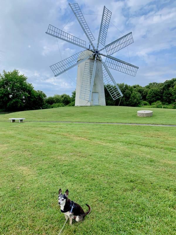 Boyd's Windmill