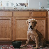 Three Tips for Surviving the Puppy Stage