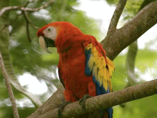 solentiname_pappagallo