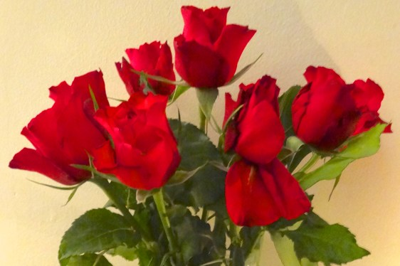 Twelve roses of Christmas