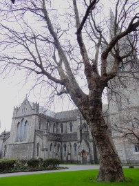 St. Patrick's Cathedral and a tree