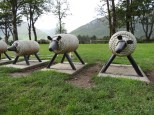 rope sheep