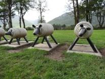 rope sheep
