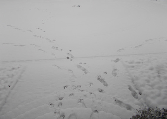 Am Sonntag Schnee