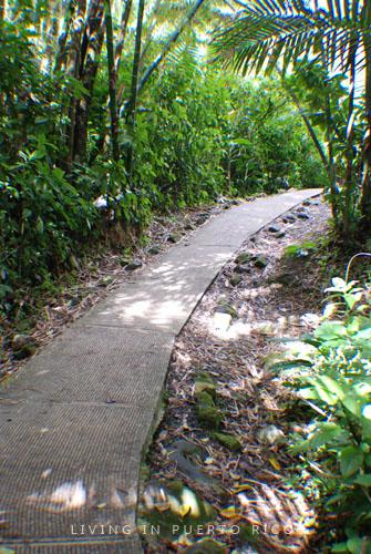 Mina Trail