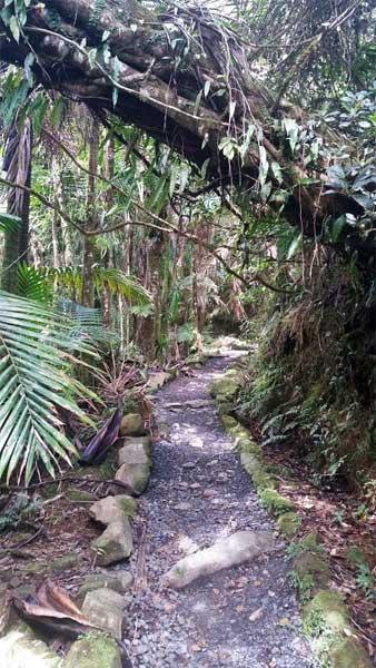 Best Rainforest Trails