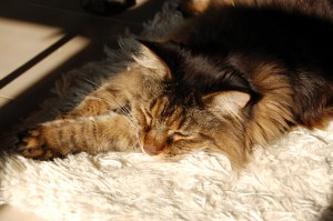 Smokey, our Maine Coon, enjoying a snooze shortly after we arrived in Mallorca.
