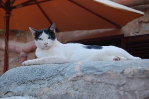 Home sweet home for Nibbles - reclining on our old stone oven outdoors