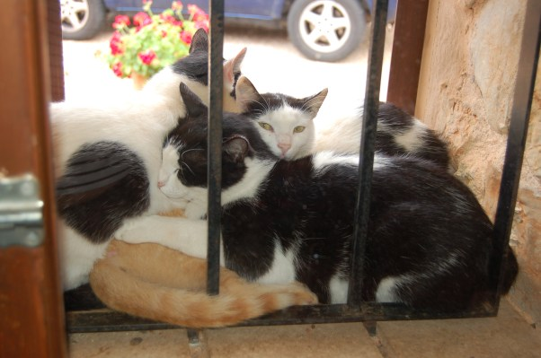 Four of our adoptees huddled in the window recess. Underneath three of them is little Peanut!