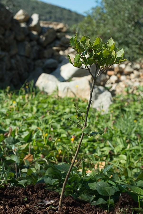 Great oaks from little acorns . . .