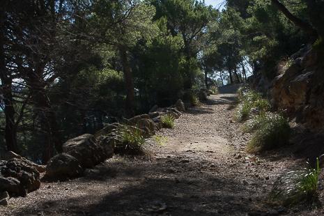 Mallorca woods walk