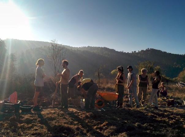 boodaville-permablitz-gardening