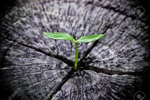 33766972-young-green-plant-growing-on-dead-tree-trunk-Stock-Photo