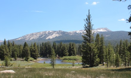 Yosemite: Tioga Road