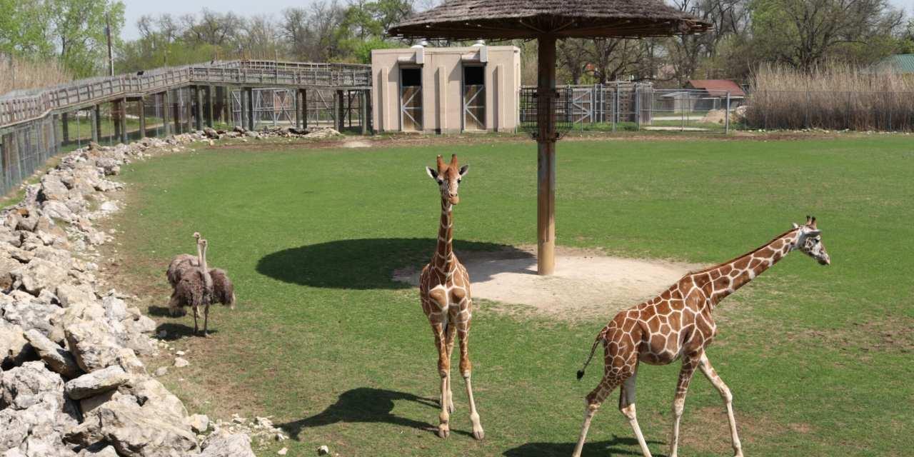 Frank Buck Zoo in Gainesville, TX
