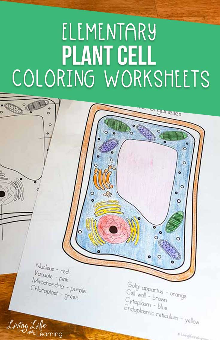Plant Cell Coloring Page : plant, coloring, Plant, Coloring, Worksheet