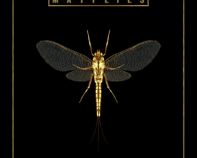 The Bergamot - 'Mayflies' | Opinions | LIVING LIFE FEARLESS