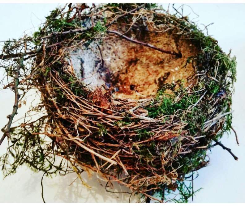 Stay Wild: Bird's Nest