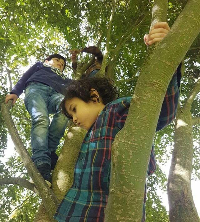 Children climbing trees