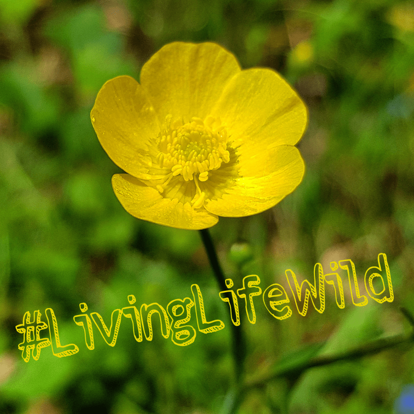 #livinglifewild, 30 Days Wild, childhood unplugged, freedom to learn, Home Education, Living Life Wild, nature, outdoors, stay wild