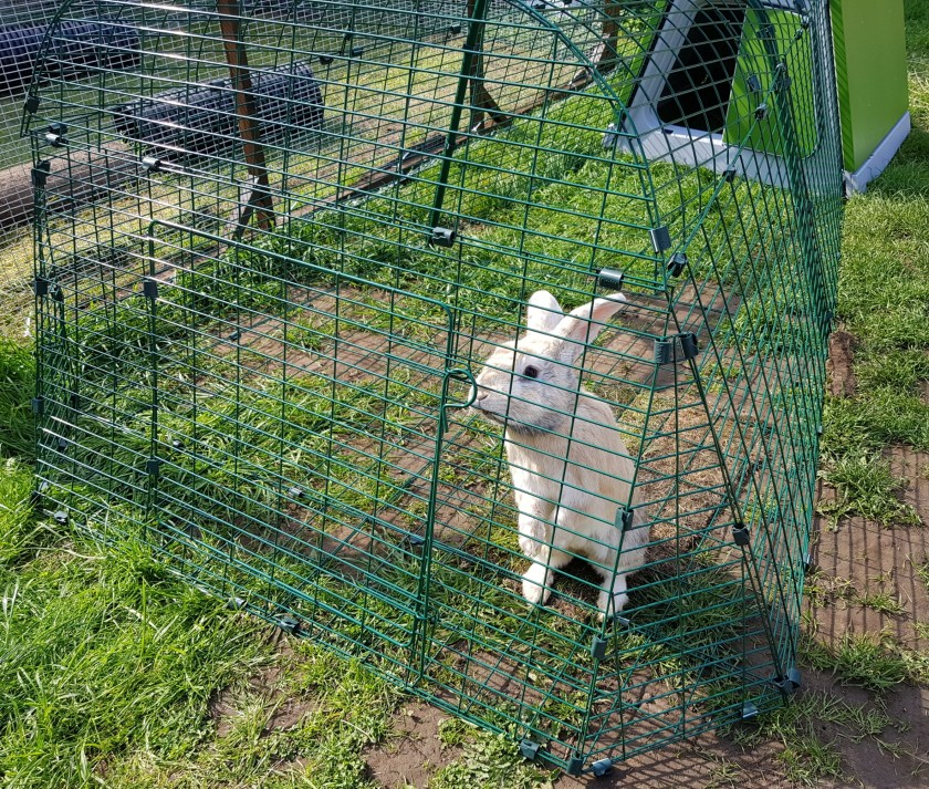 Omlet, Eglu Go, rabbit, pets, hutch and run, review, furbabies, furry family, bunny, enclosure