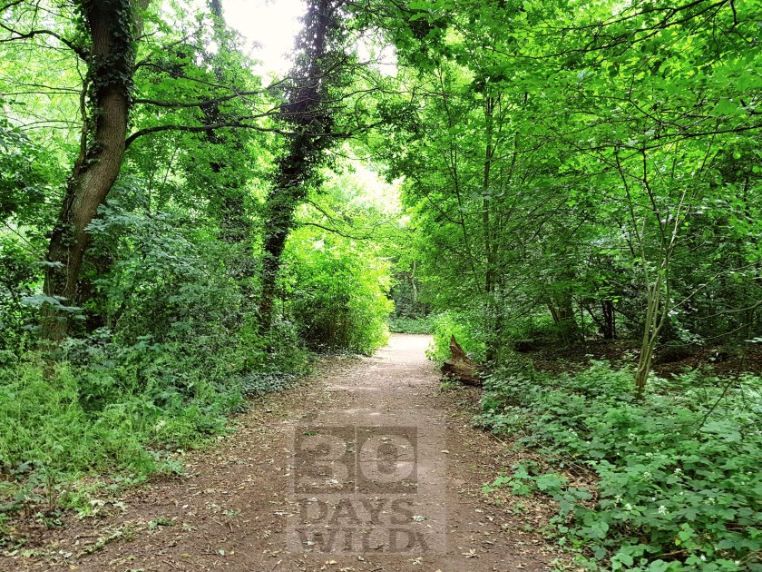 30 days wild, #30dayswild, #livinglifewild, The Wildlife Trusts, stay wild, nature, wildlife, natural environment, childhood unplugged, get outside, outdoors