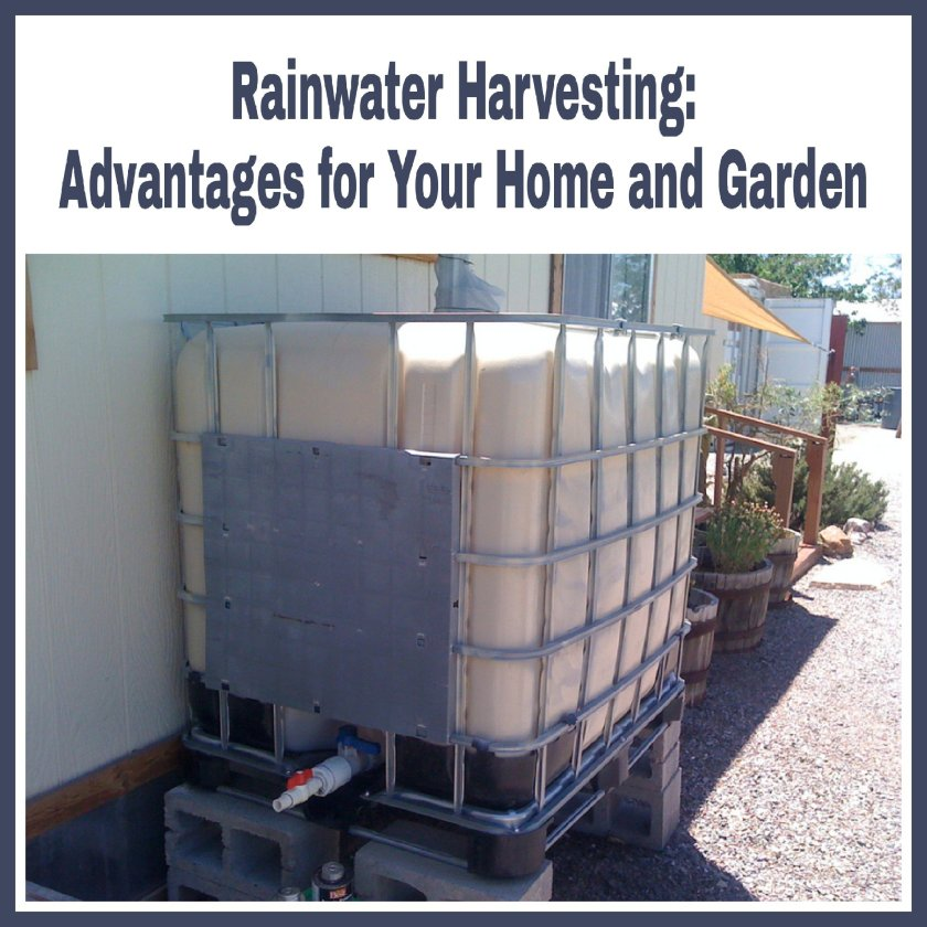 Rainwater Harvesting: Advantages for Your Home and Garden title with image