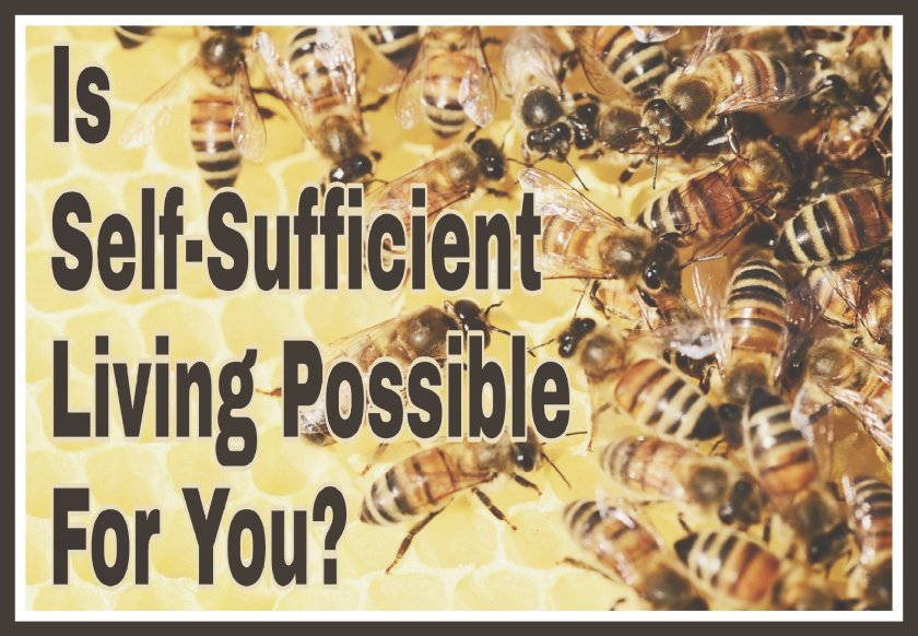 Is Self-Sufficient Living Possible For You? Title on background image of bees.