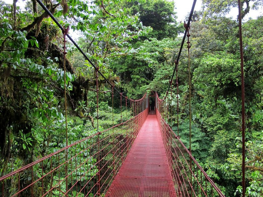 Monteverde Cloud Forest hanging bridge above the forest canopy.