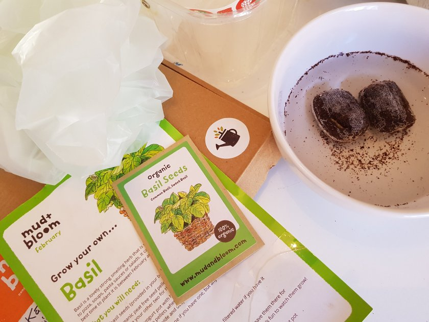 An image of everything needed for grow your own basil. Soil pellets expanding in water.