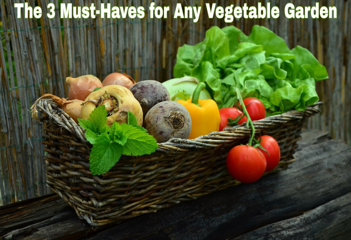 The 3 Must-Haves for Any Vegetable Garden