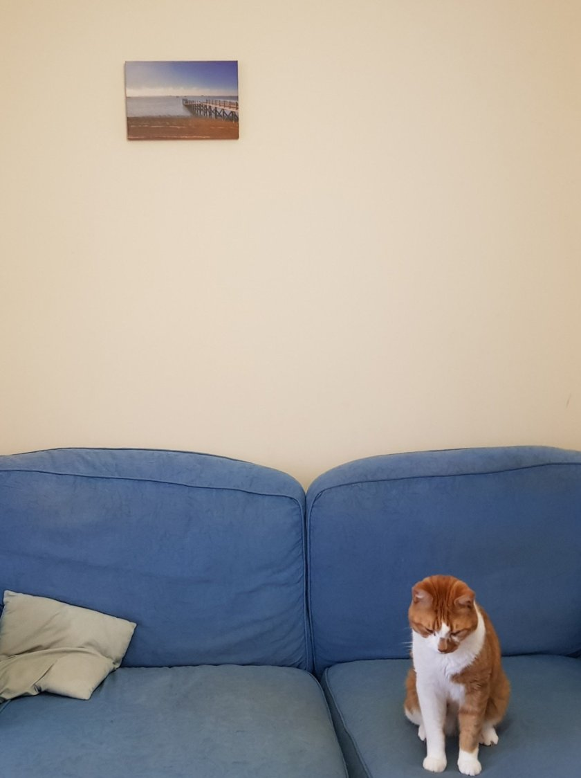 Canvas on wall. Matches colour scheme. A well coordinated cat is sat on the sofa too, also matching the canvas art!